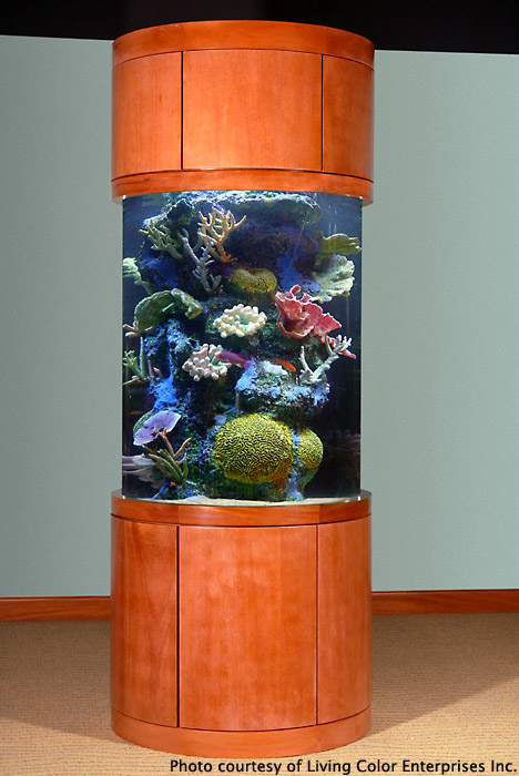 aquatic art inc aquarium design and maintenance specialists denver colorado living. Black Bedroom Furniture Sets. Home Design Ideas